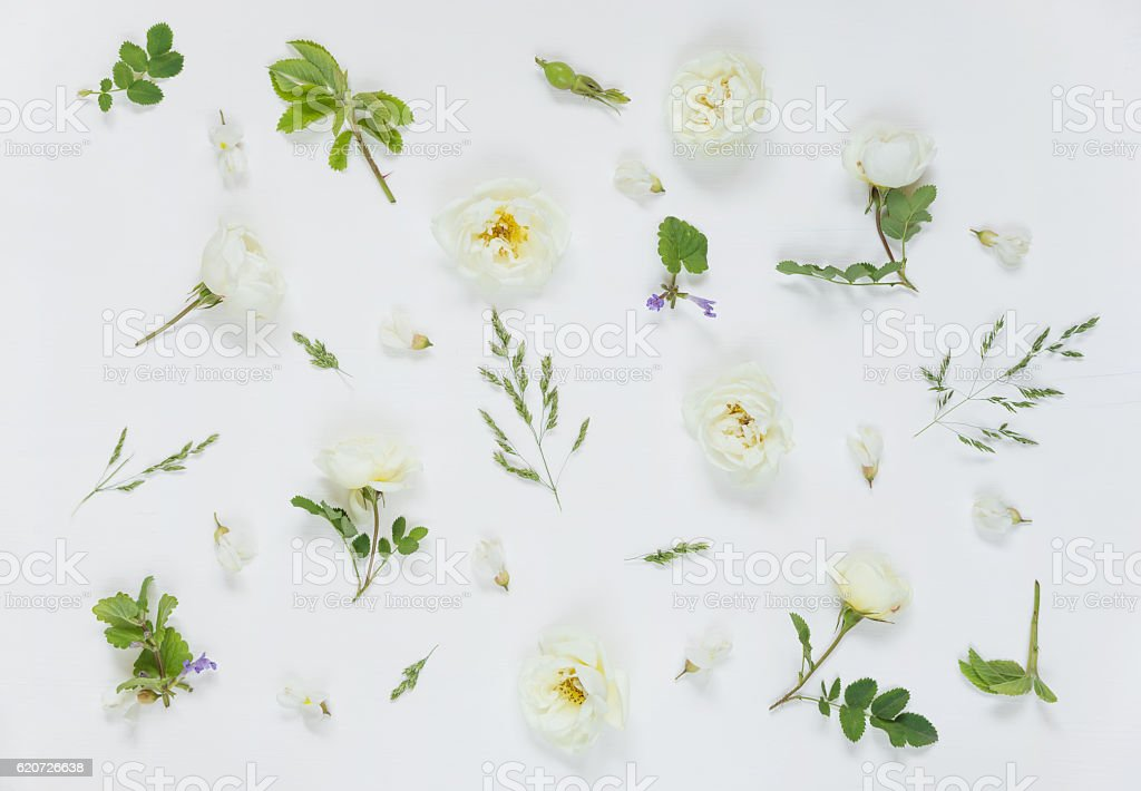 Natural background with white wild rose flowers stock photo