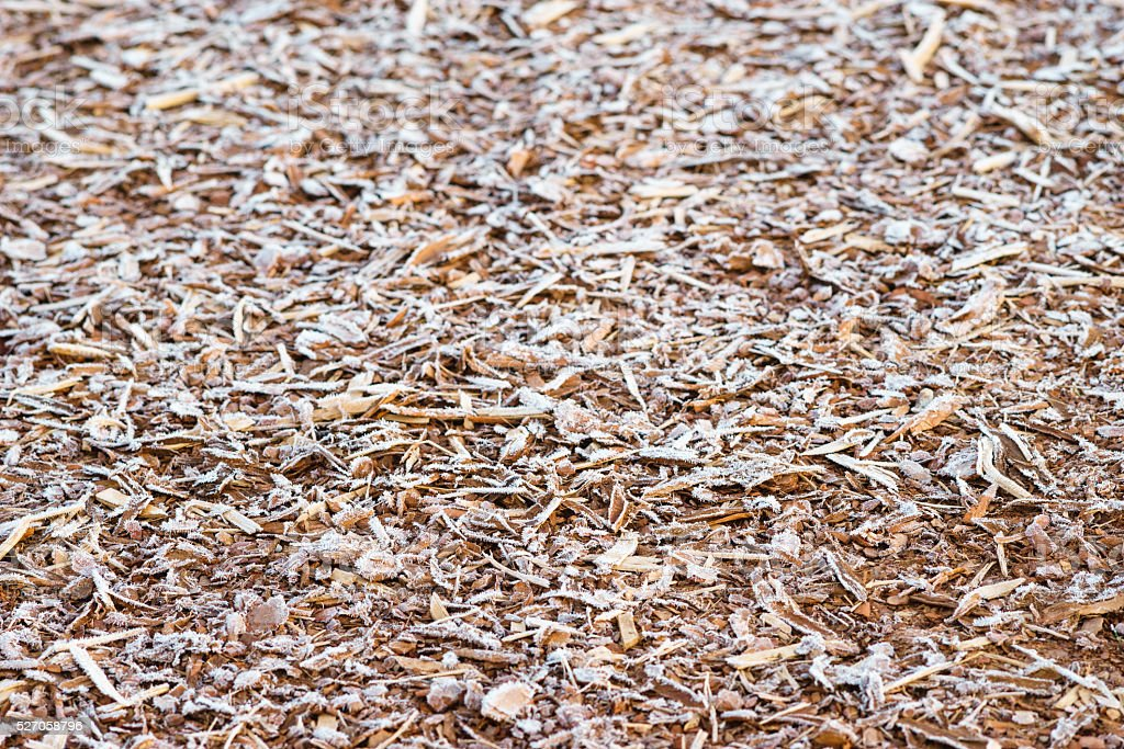 Natural bark covered by morning rime stock photo
