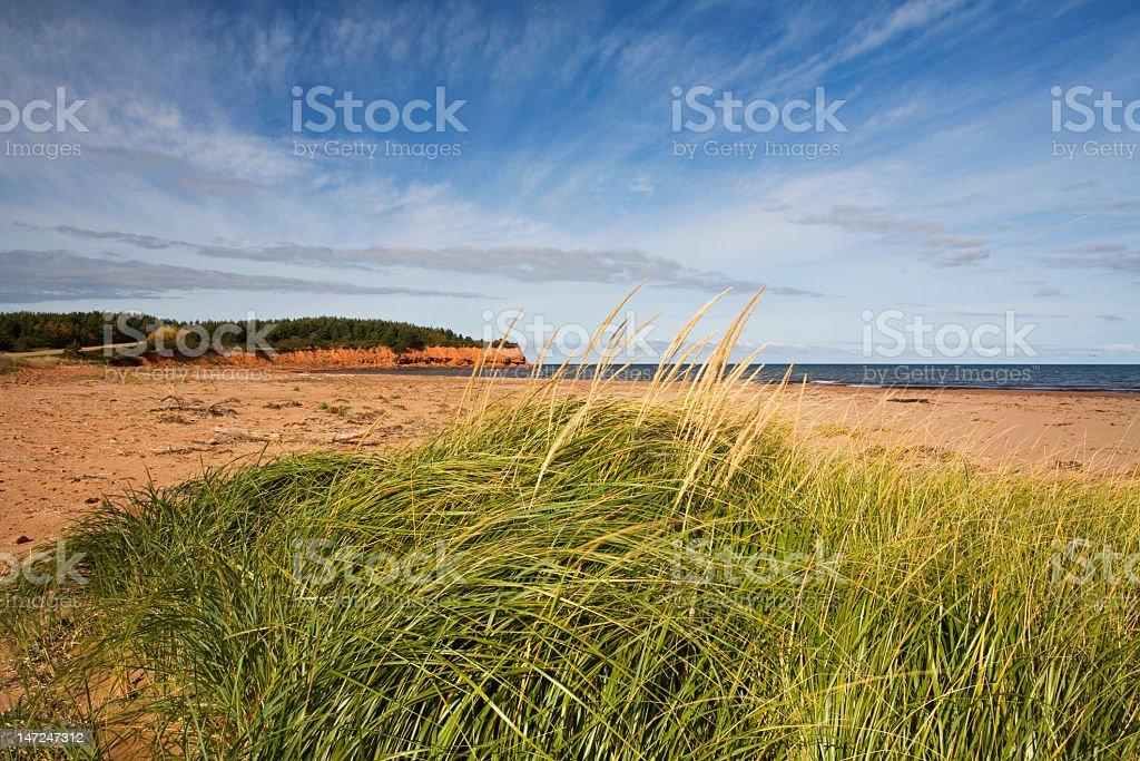Natural beach stock photo