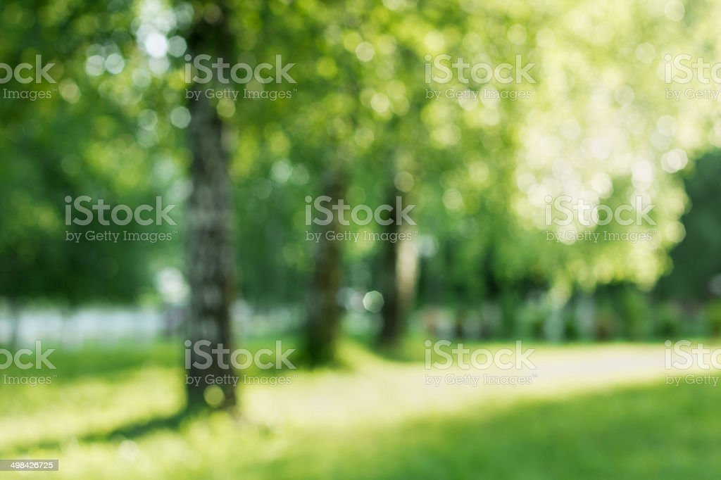 natural bokeh background, birch out of focus stock photo