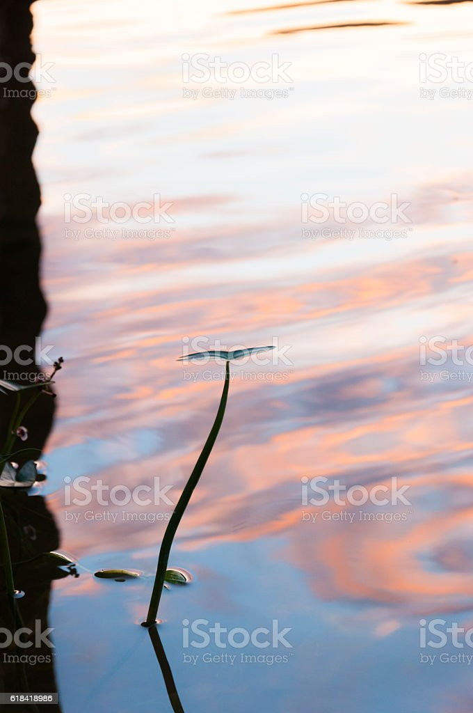 Natural Cover Frame. Water Lily leaf silhouette. Sunset lake reflection. stock photo
