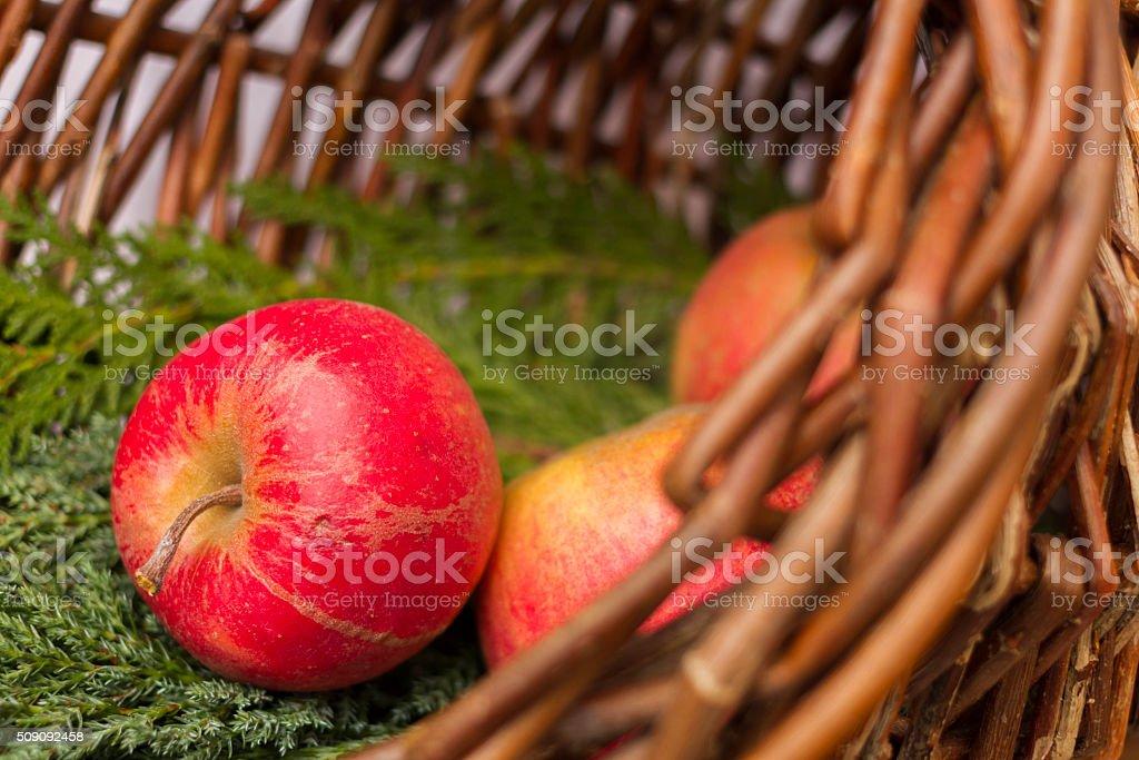 Natural Decoration stock photo