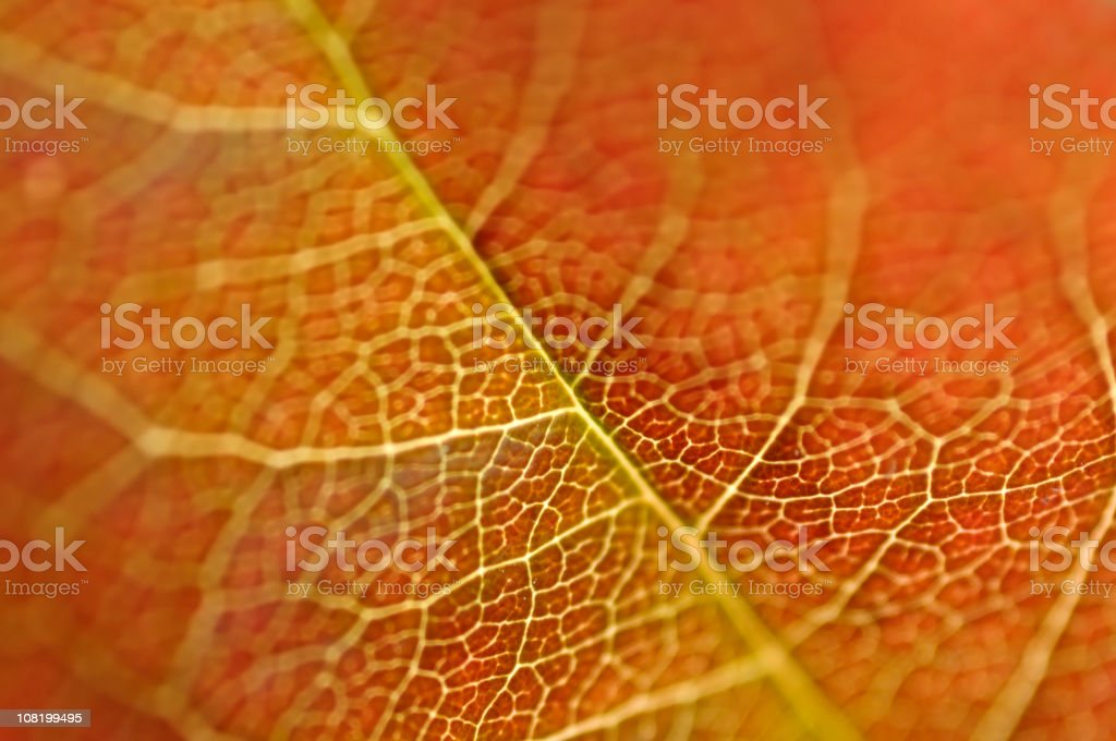 Natural Dreams in Color royalty-free stock photo