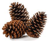 Natural dry pine cones.