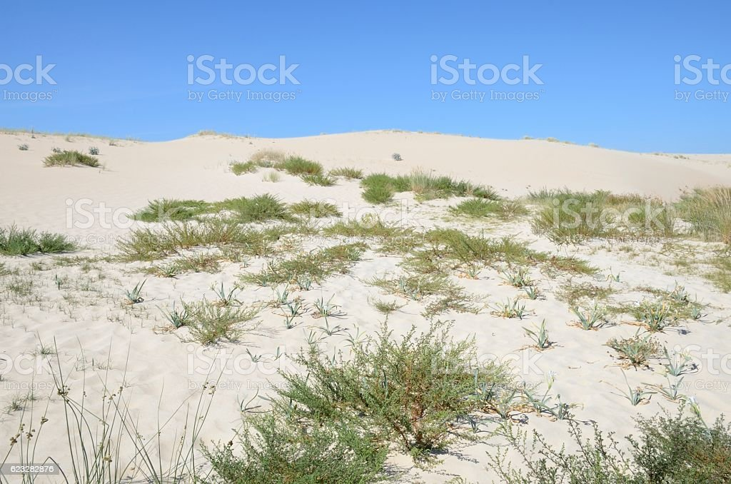 Natural dunes in Galicia stock photo