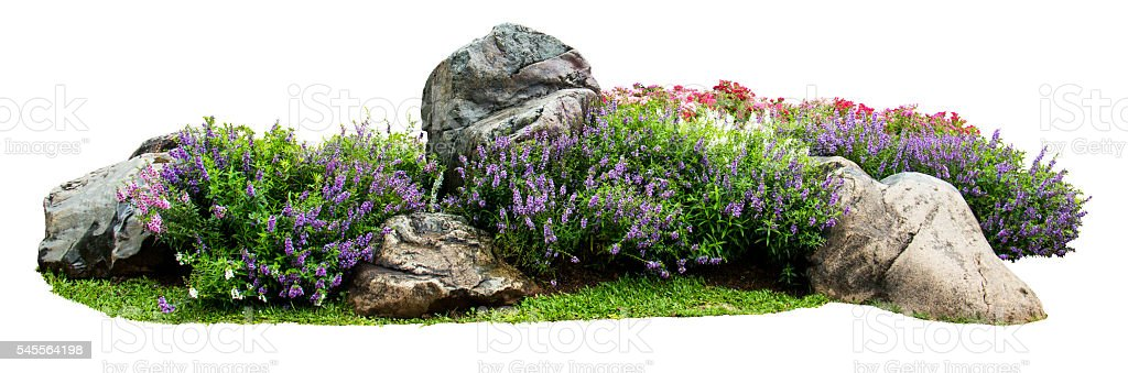 Natural flower and stone in garden isolated on white background stock photo