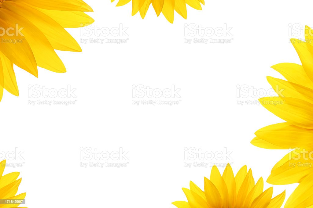 natural flower details blank white summer background royalty-free stock photo