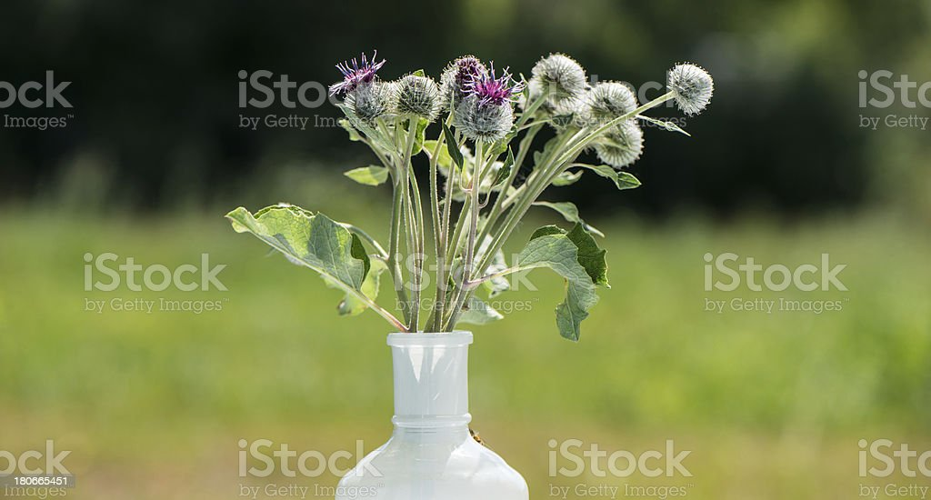 natural flowers in vase stock photo