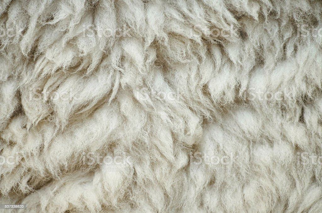 Natural fluffy flat sheep skin background texture. Easter postcard...