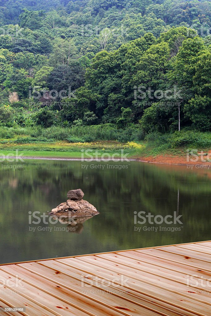 Natural forest and river stock photo