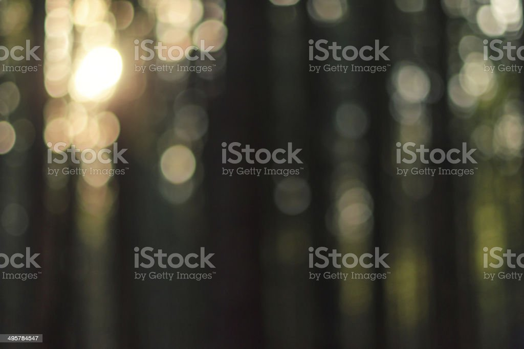 Natural forest blurred background stock photo