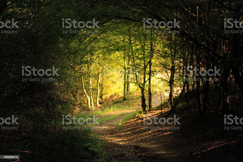 natural forest tunnel road stock photo