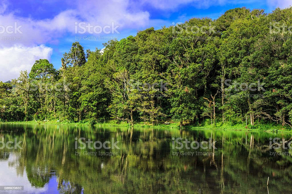 Natural forest view with water from lake stock photo