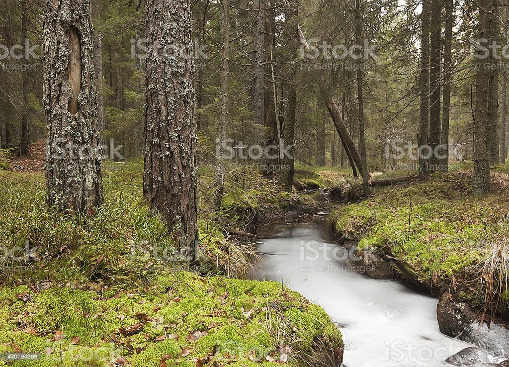 Natural forest with frozen stream, late autumn stock photo