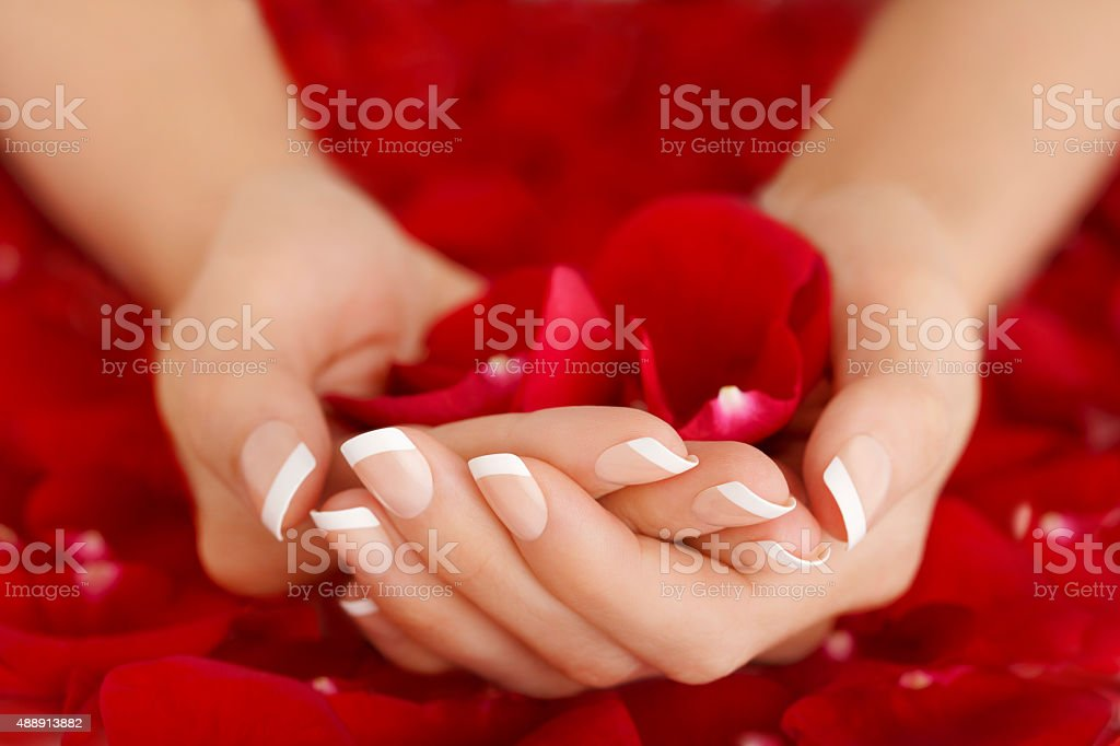 Natural French Manicure Hands Holding Red Rose Petals royalty-free stock photo