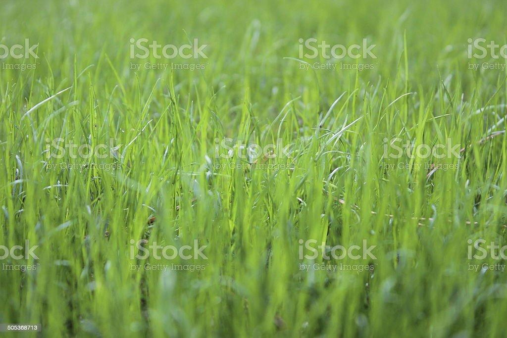 Natural grass stock photo