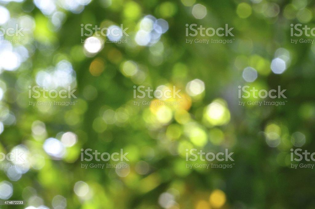 Niewyraźne tło zielony naturalne zbiór zdjęć royalty-free