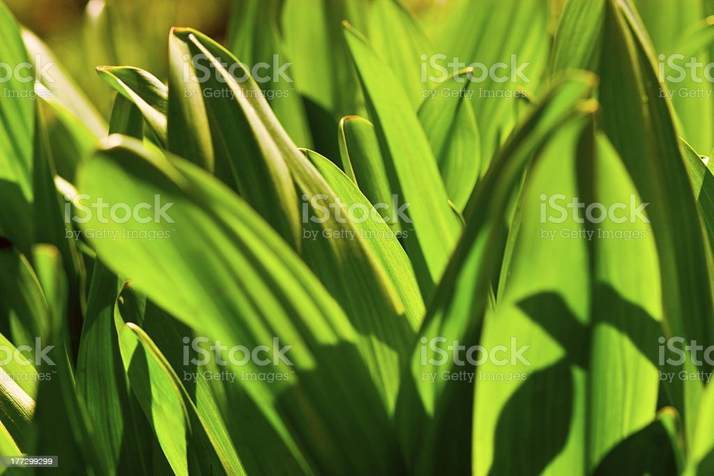natural green royalty-free stock photo