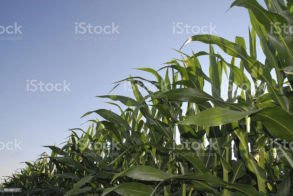 Natural Growth royalty-free stock photo