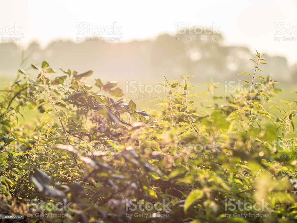 Natural hedgerow and nettles stock photo
