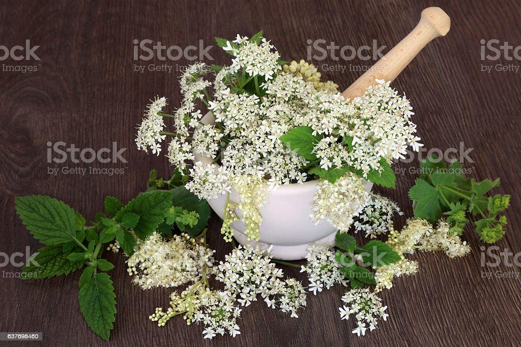 Natural Herbal Medicine stock photo