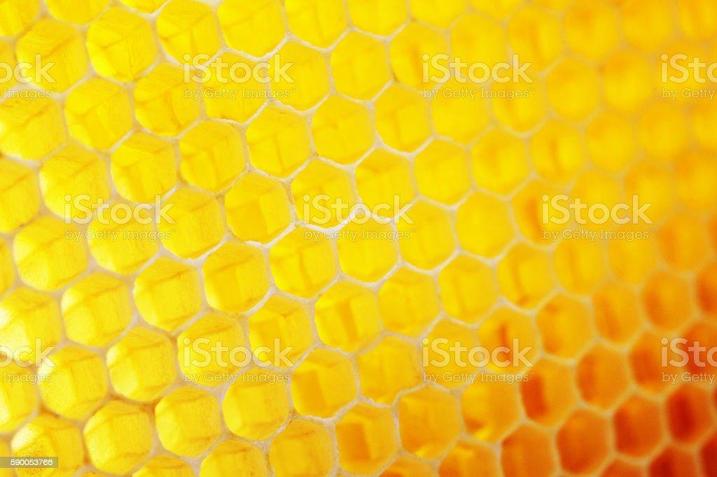 Natural honeycomb background stock photo