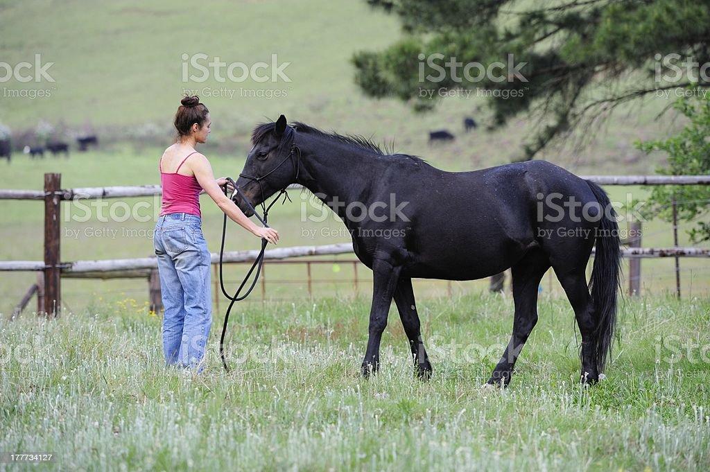 Natural Horsemanship royalty-free stock photo