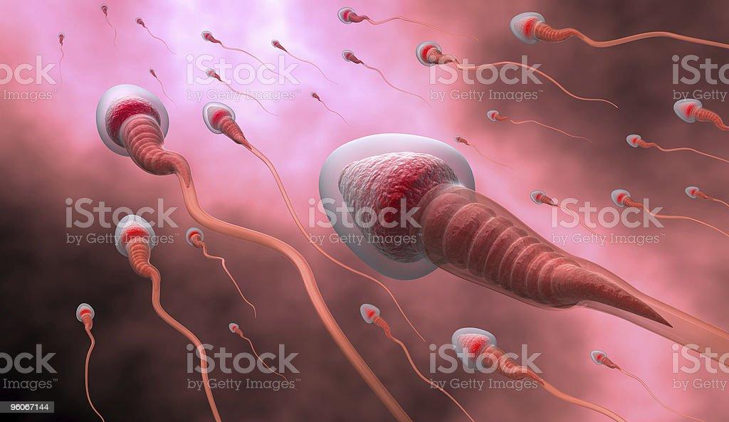 Natural insemination royalty-free stock photo