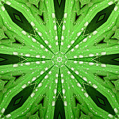 Natural kaleidoscope: mirrored image of green leaves