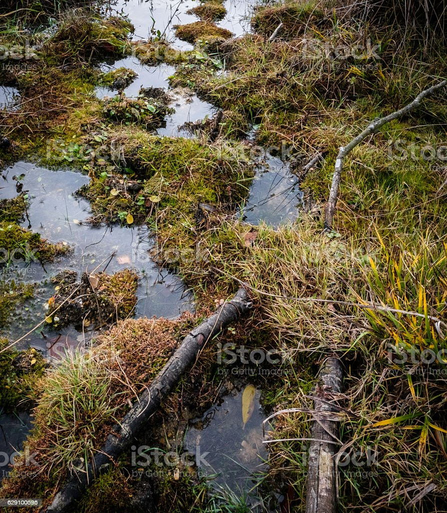 Natural lagoon seen in a nature reserve stock photo