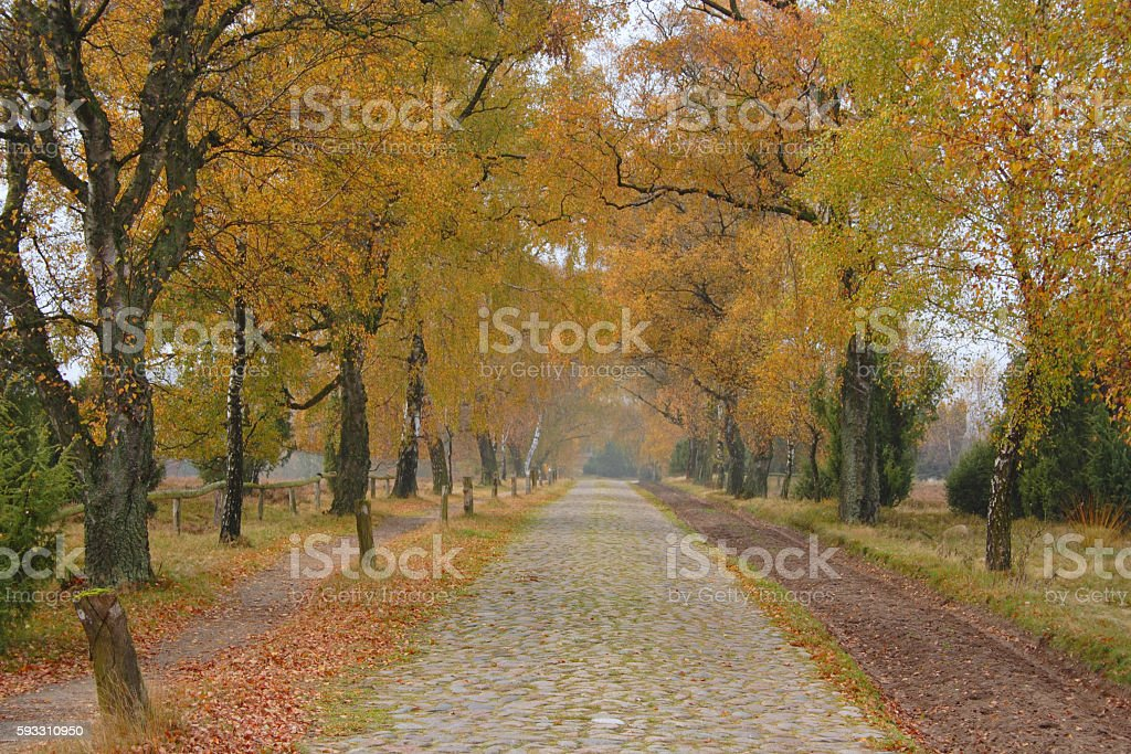 Natural landscape in Germany stock photo