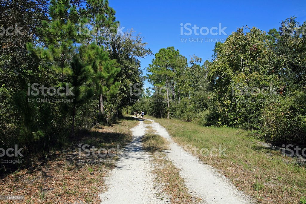 natural landscape of Florida stock photo