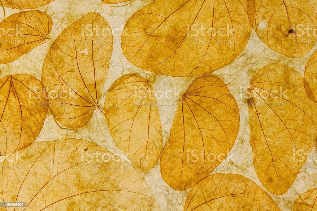 Natural leaves paper texture closeup background royalty-free stock photo