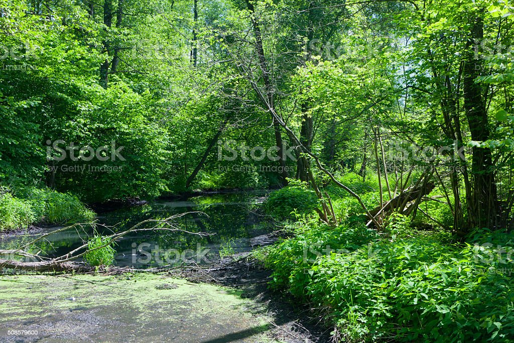 Natural Lesna river in summer midday stock photo