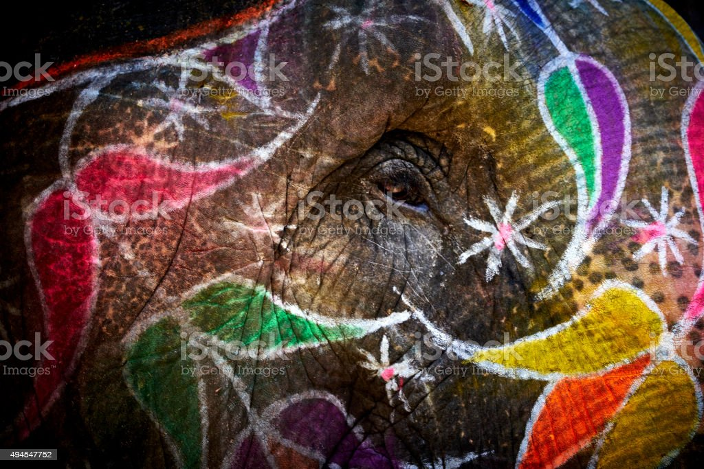Natural Light Close-up of Colorful Painted Indian Elephant in India stock photo
