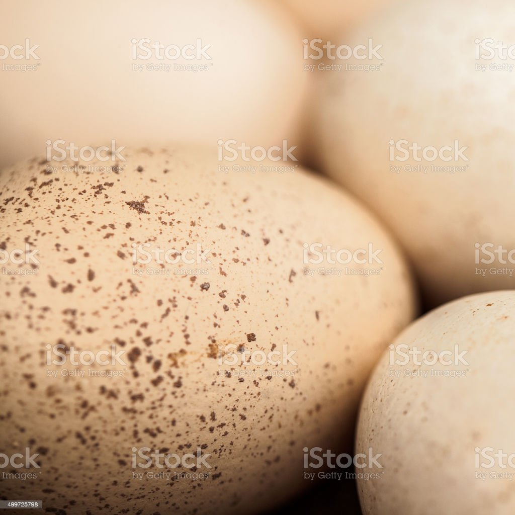 Natural light photo of assorted chicken eggs stock photo