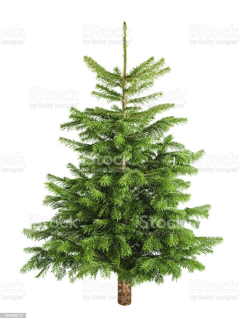 Natural little Christmas tree without ornaments stock photo