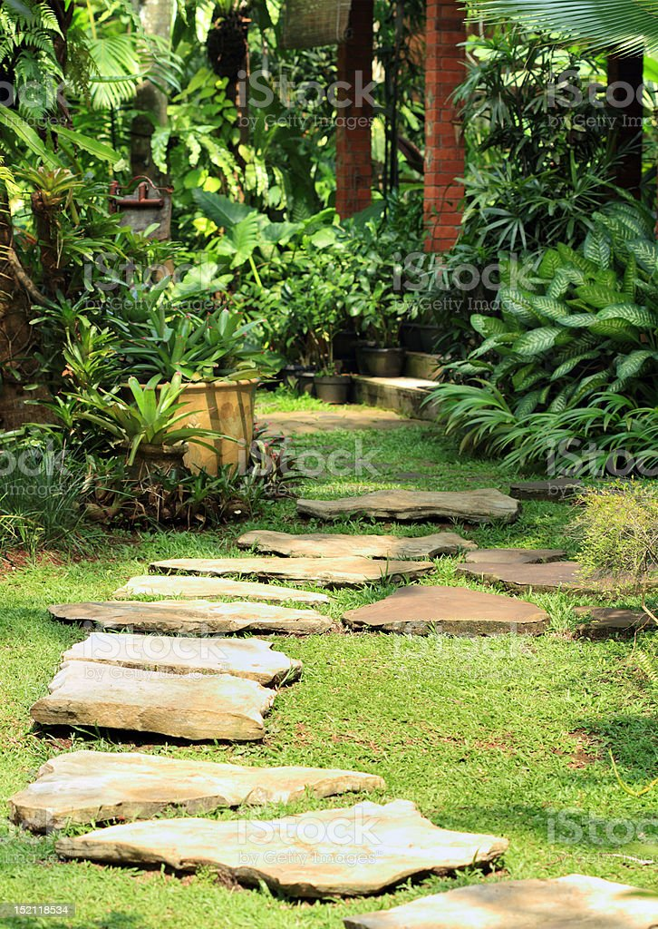 Natural lush garden stock photo