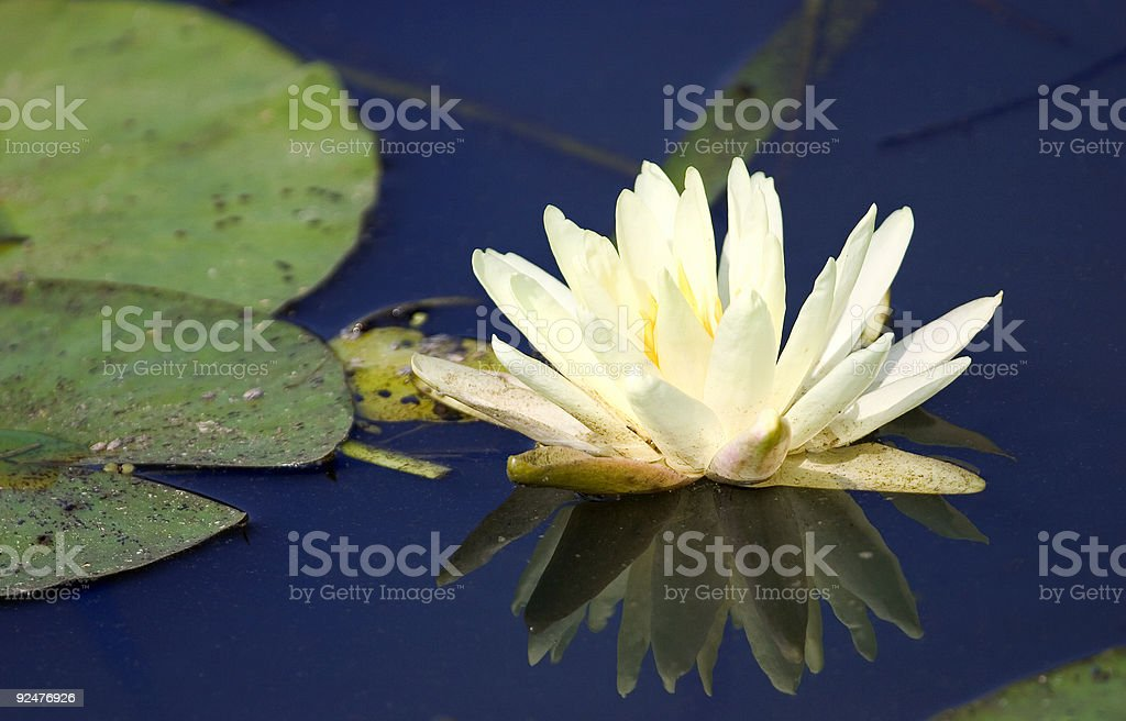 natural mirror (2) royalty-free stock photo