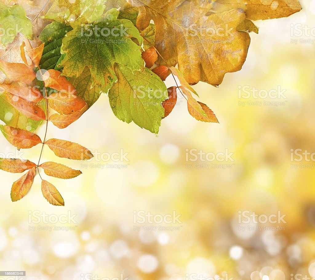 Natural outdoors bokeh in golden autumn tones royalty-free stock photo