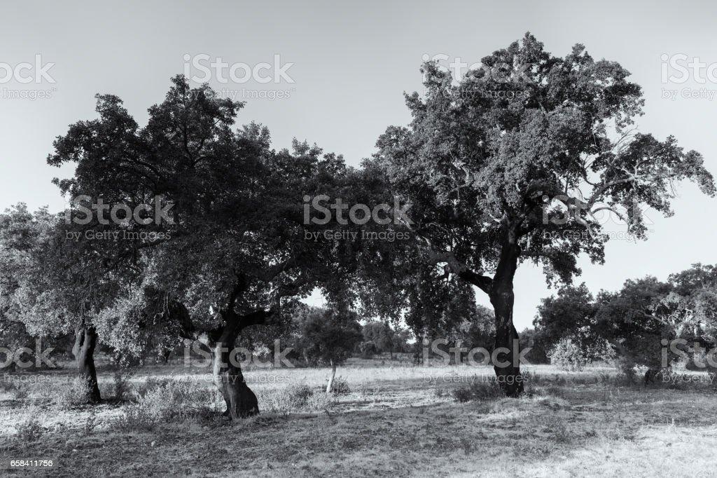 Natural Park of Cornalvo stock photo