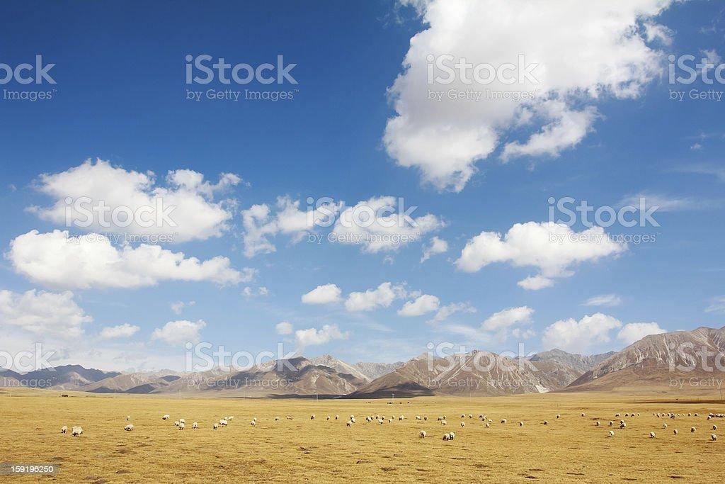 Natural pasture royalty-free stock photo