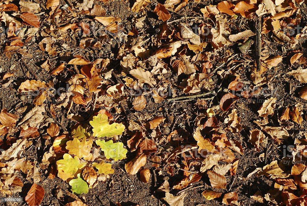 Natural Pattern from Fall Season royalty-free stock photo