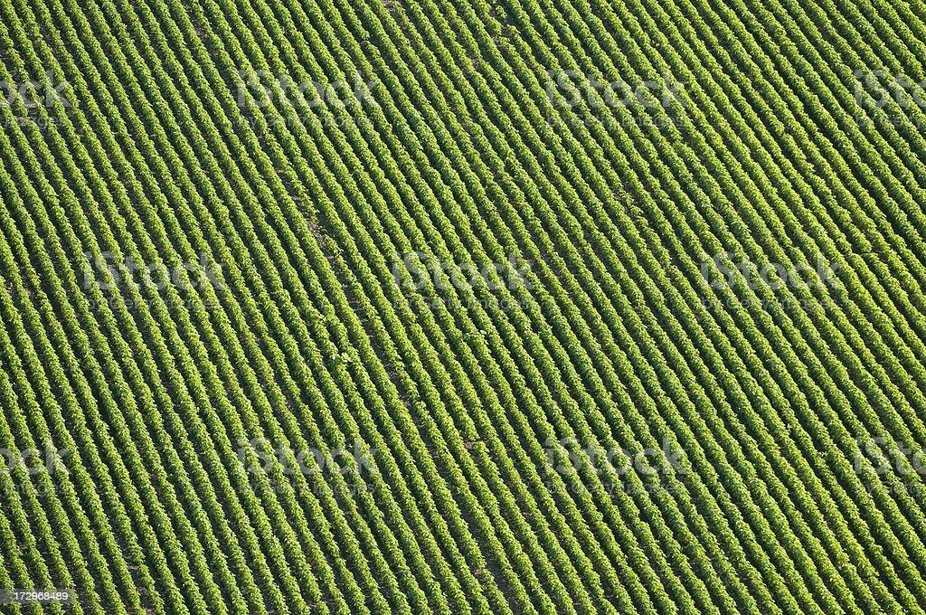 natural pattern royalty-free stock photo