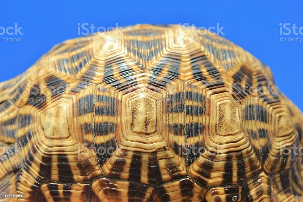 Natural Patterns an Art - Leopard-skinned Tortoise stock photo