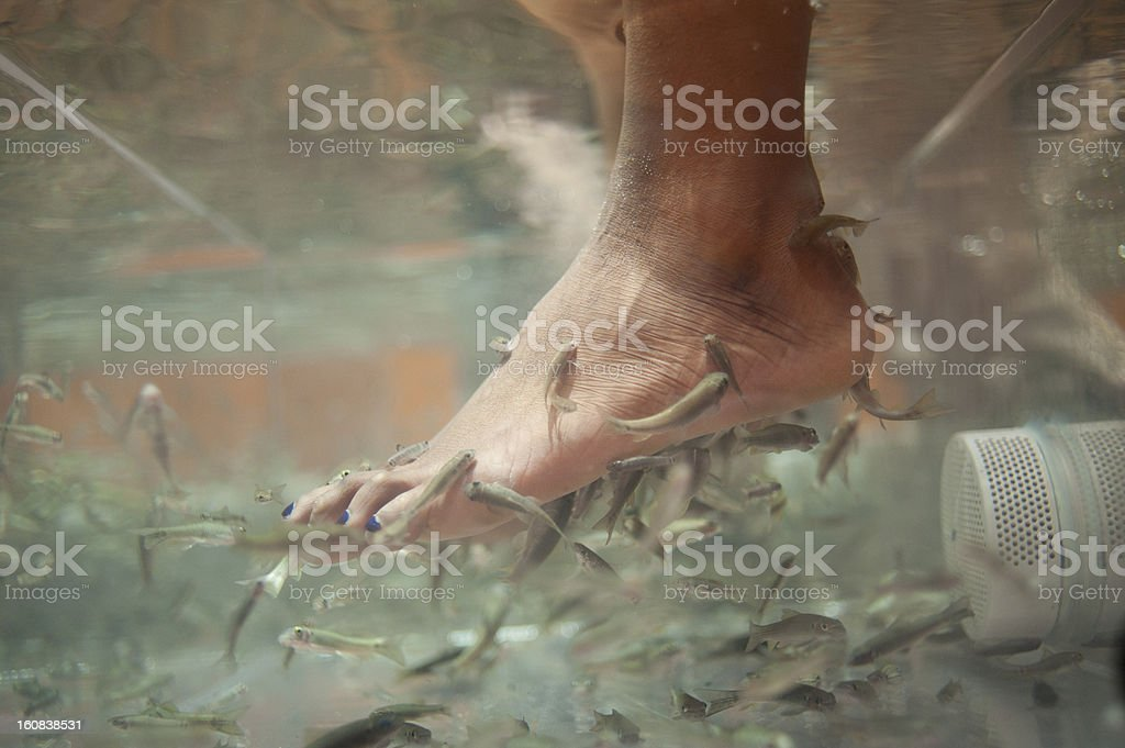 Natural pedicure with Garra Rufa fish stock photo