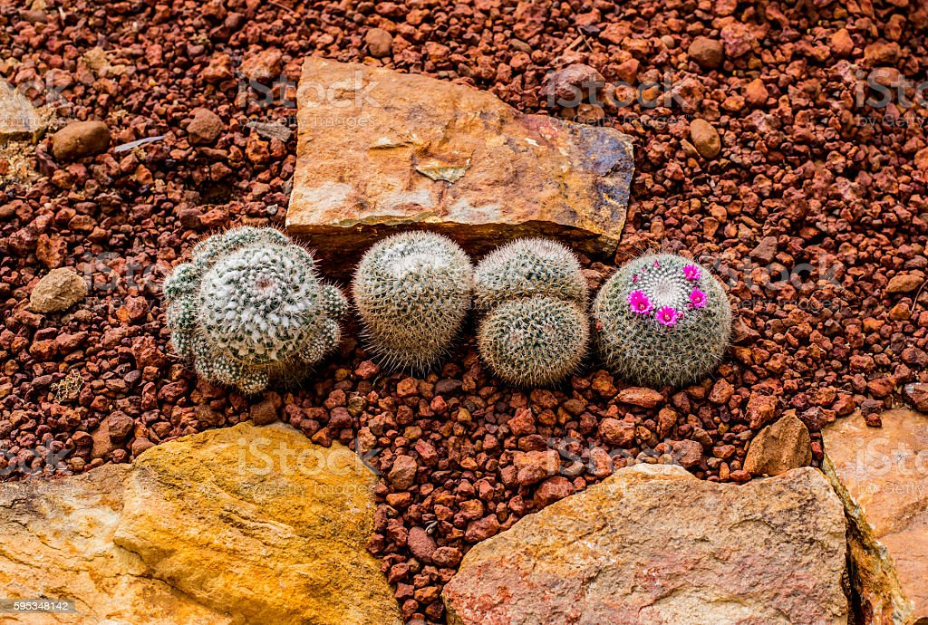 natural photo, cactus in the hot weather stock photo