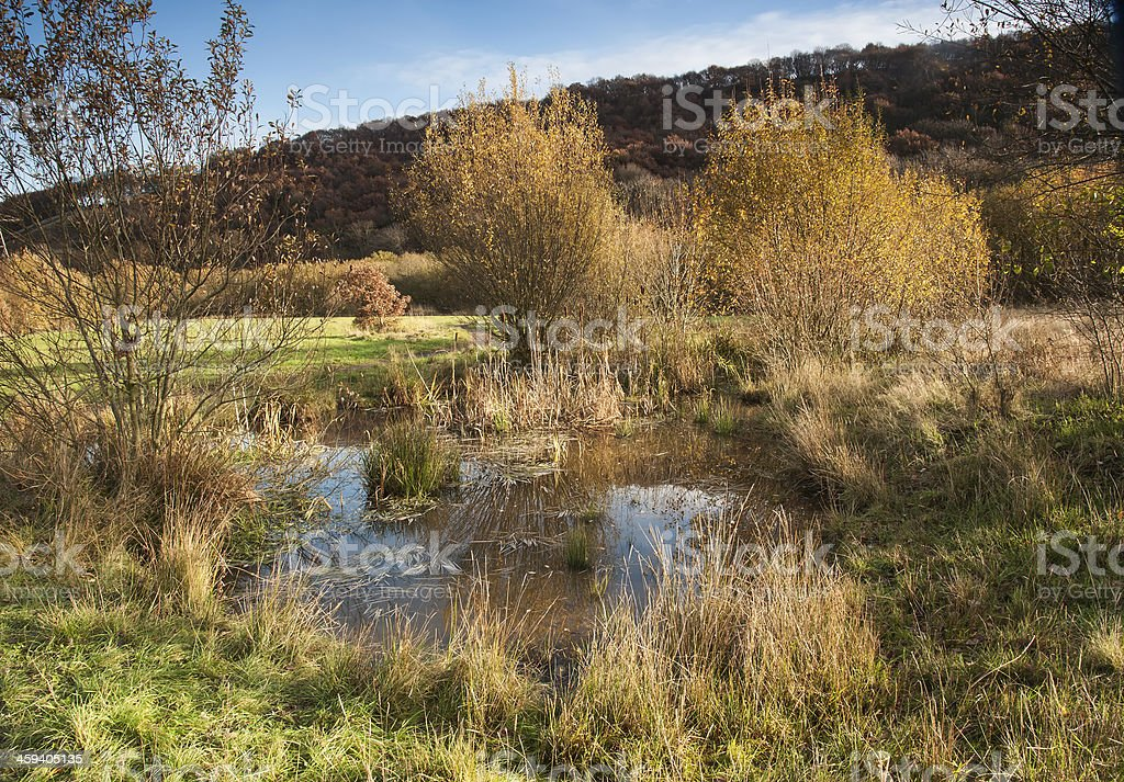 natural pond on a nature reserve in yorkshire stock photo