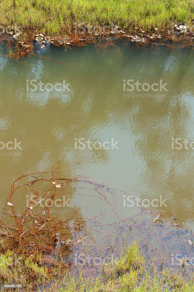 Natural pond vertical royalty-free stock photo