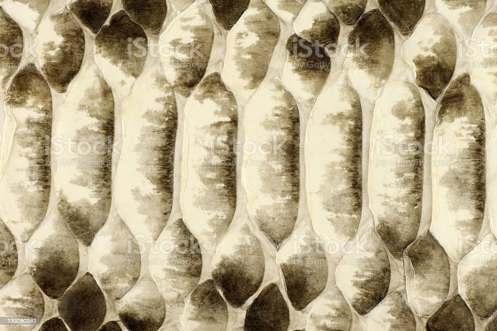 Natural Python Skin royalty-free stock photo